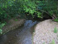 link to image cottaneva_creek_downstream_img_0922.jpg