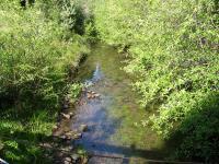 link to image dutch_charlie_creek_upstream_39_68954_123_65921_img_1055.jpg