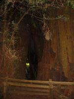 link to image redwood_hollow_img_0878.jpg