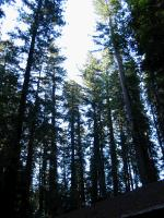 link to image redwoods_img_0880.jpg